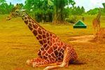 play Escape Game African Zoo