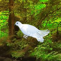 play White Pigeon Forest Escape