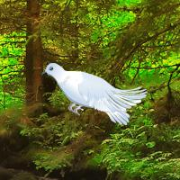 White Pigeon Forest Escape game