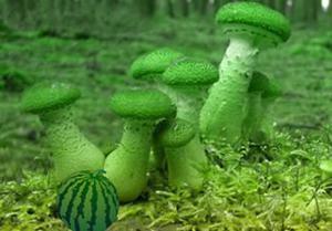 play Mushroom Greenland Escape