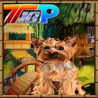 play Top10 Rescue The Cute Puppy