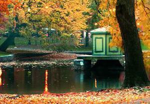 play Autumn Forest Turkey Escape