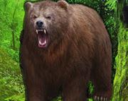 play Beg Grizzly Bear Forest Escape