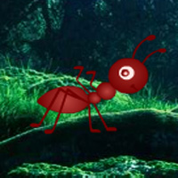 play G2R Jumbo Ant Forest Escape