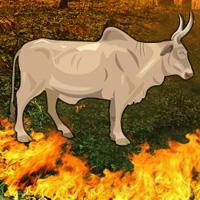 play Fire Forest Bull Escape