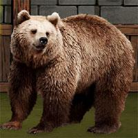 play The Grizzly Bear Rescue