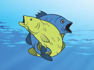 play Friendly Fish Coloring