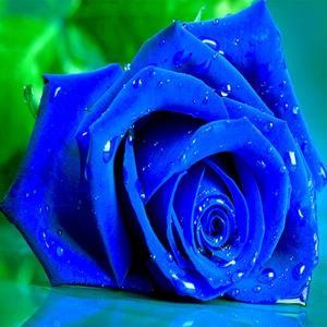 play Blue Roses Puzzle