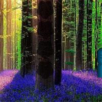 play Lavender Forest Escape