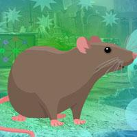 Rodent Brown Rat Escape game