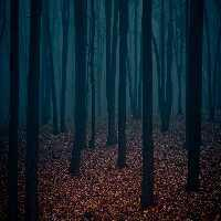 Fun Dark Forest Fun Escape game