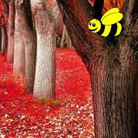 Autumn Fall Forest Escape game