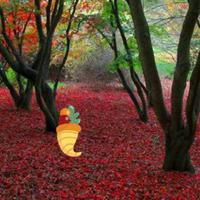 play Thanksgiving Red Autumn Forest Escape