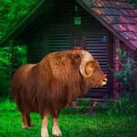 Musk Ox Forest Escape Html5 game