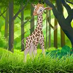 play Happy Giraffe Escape